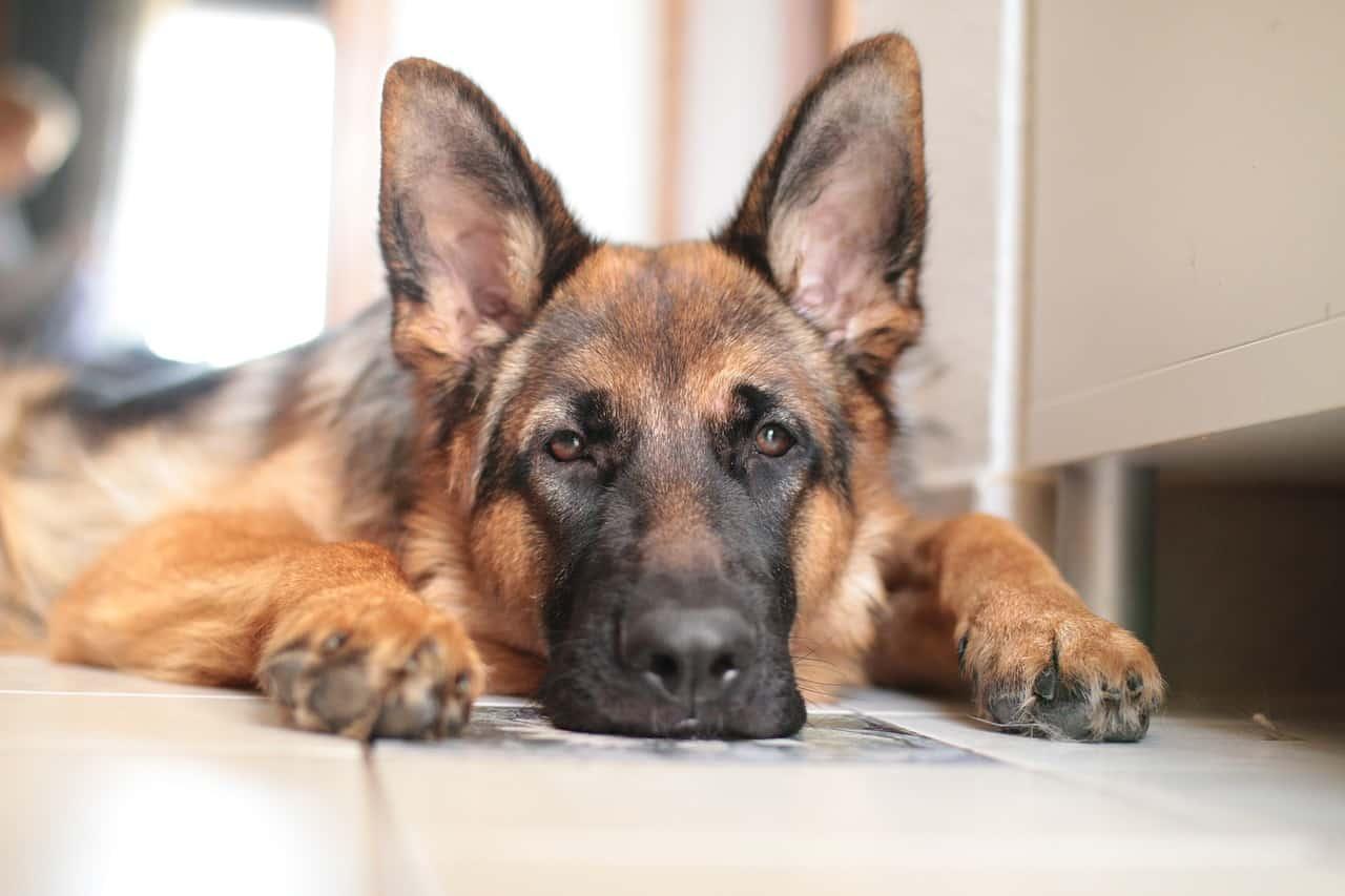Consigli Per Viaggiare Sereni Con Il Tuo Cane Di Casa Falcone