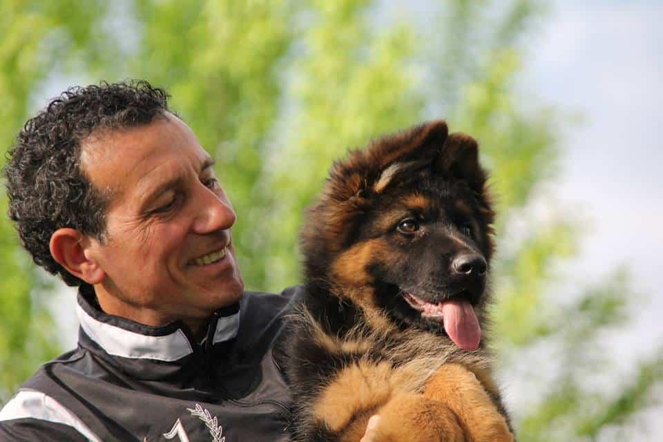Cucciolo pastore tedesco pelo lungo