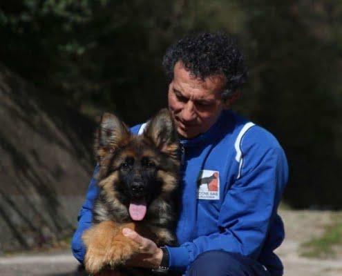 Cuccioli Pastori tedeschi a pelo lungo
