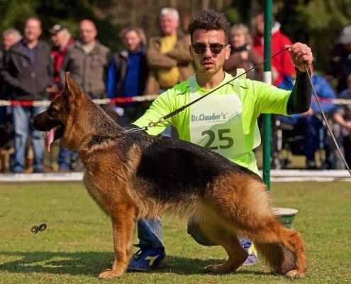 L'importanza della forza nei cani da ring