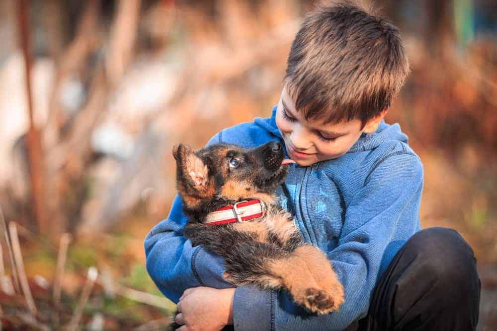 Cuccioli di cane e bambini: la migliore razza è il pastore tedesco