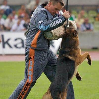 Come addestrare un pastore tedesco alla guardia