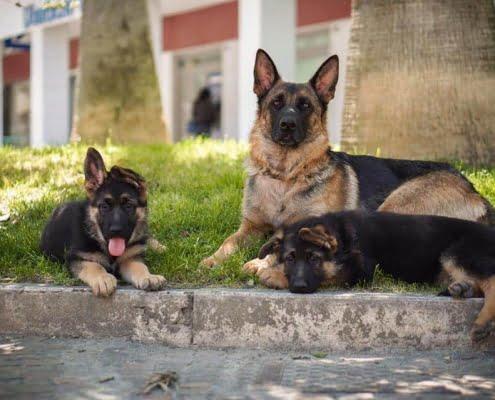 Come riconoscere e curare al meglio la Leishmaniosi del cane