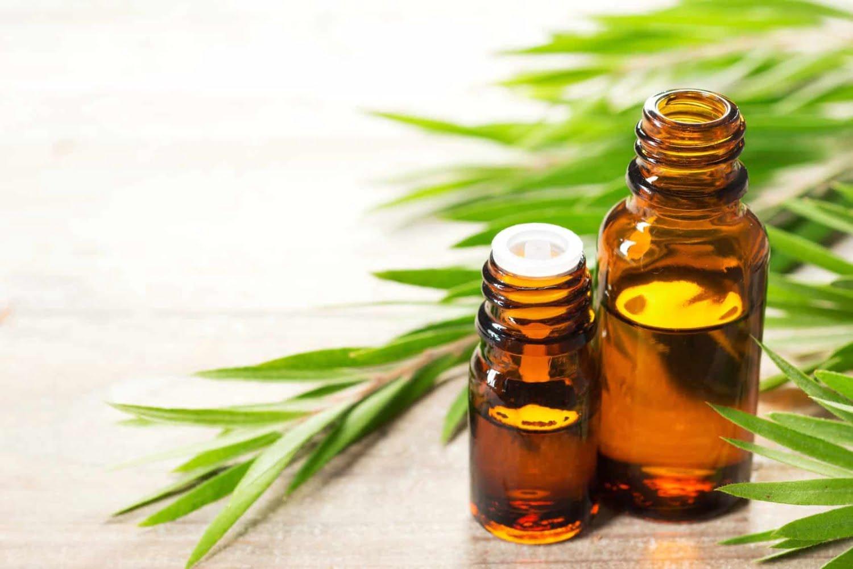 Image result for tea tree oil malassezia cane
