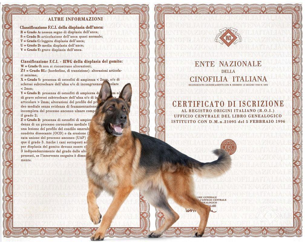 Pedigree ENCI: il certificato genealogico del cane di razza