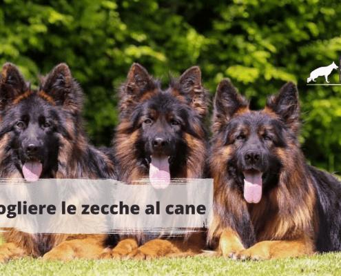 Come togliere le zecche al cane (1)