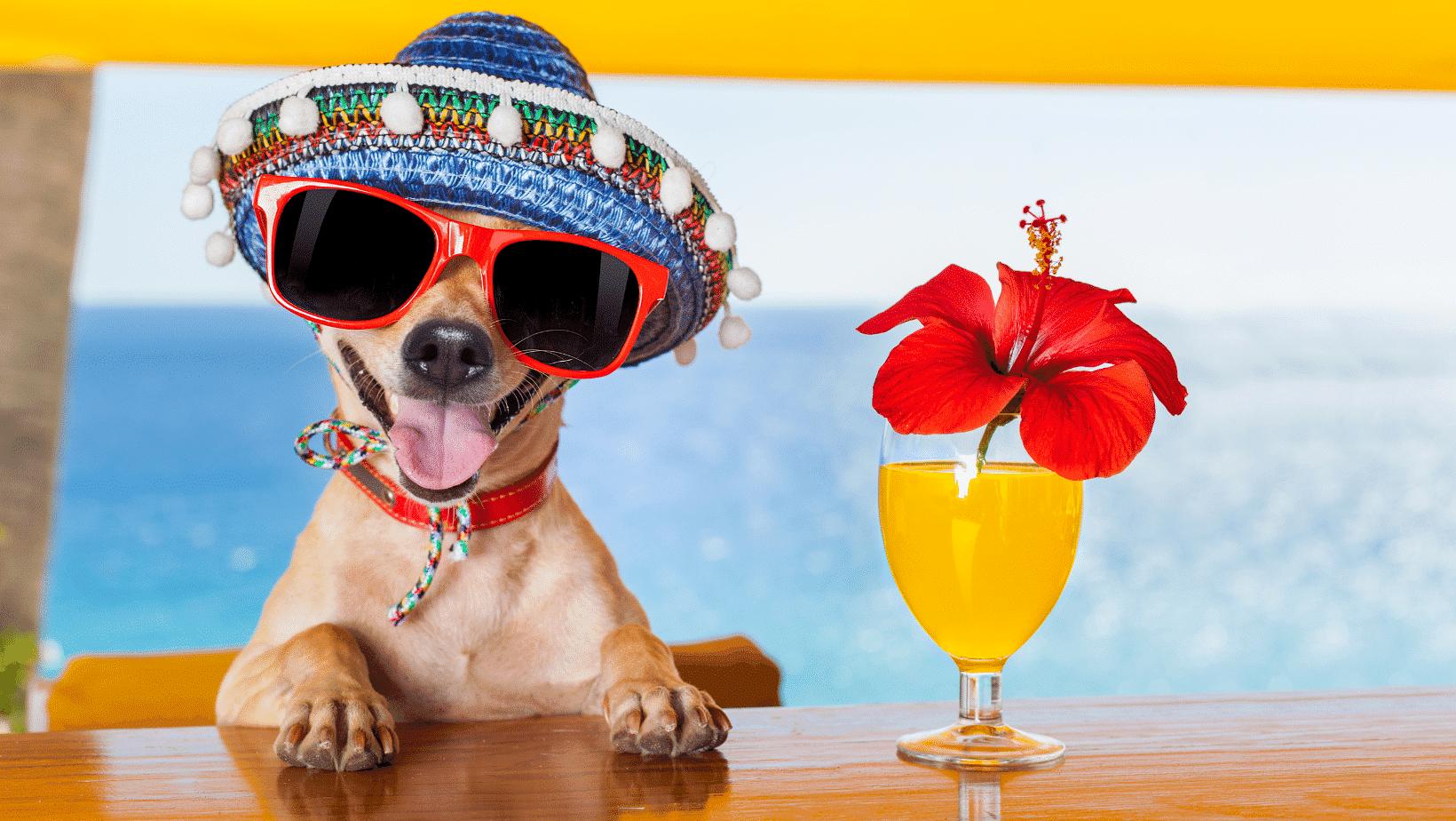 Giornata mondiale del cane